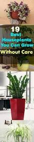 19 best houseplants you can grow without care houseplant