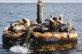 California wildlife tours images Tours long beach tours sightseeing tours and attractions jpg