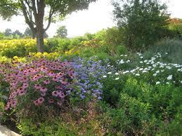 How To Start A Garden Bed Wildflower Garden Design Breathtaking Growing Wild Flowers How To