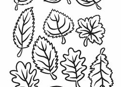 kindergarten fall worksheets u0026 free printables education com