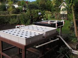 the aquaponic grow bed