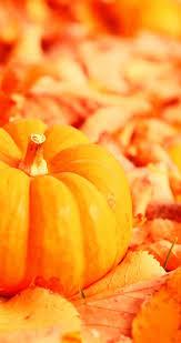 fall pumpkin wallpapers pumpkin on a leaves carpet hd autumn wallpaper