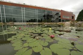 Aquascape Inc Water Lilies The Jewels Of The Water Garden Town U0026 Country Living