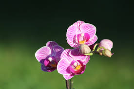 Purple Orchids Free Images Nature Blossom Flower Petal Bloom Natural
