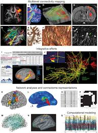 frontiers mapping the connectome multi level analysis of brain