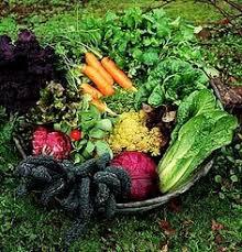 getting rid of ants in a vegetable garden vegetable garden