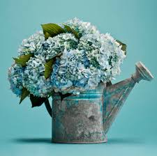 hydrangea arrangements our favorite hydrangea arrangements flower magazine