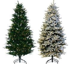 simple decoration santa s best trees 6 5 frasierfir tree