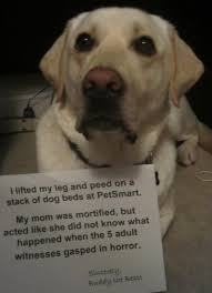 Dog Peed On Bed I Lifted My Leg And Peed On A Stack Of Dog Beds At Petsmart My