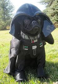 Frenchie Halloween Costume Luna Sailor Moon Black Pug Darth Vader Fall Season
