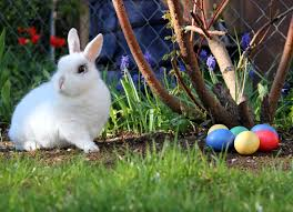 easter traditions around the uk ask