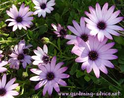 annual plants how to get the best out of your annual flower garden