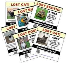 missing pet poster create your lost pet posters
