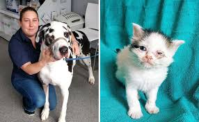 Dog Going Blind What To Do Great Dane Helps Stop Feral Kitten From Going Blind Petcha