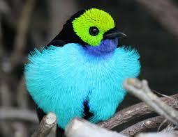 the dark secrets of the bird world wait but why