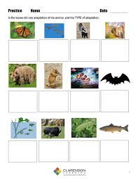animal adaptations lesson plan clarendon learning