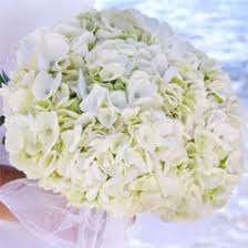 white hydrangeas fresh white hydrangea bridal bouquet global