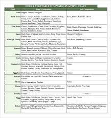 herb growing chart sle companion planting chart 9 documents in pdf word