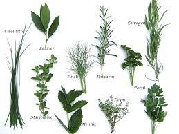 feuille de cuisine herbes aromatiques produits cuisine française