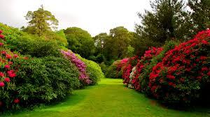 flower garden background images clipart