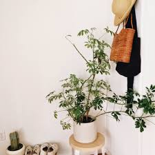 Home Interior Plants by Moon To Moon White Walls And House Plants