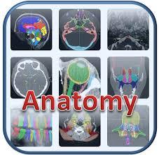 Sagittal Brain Mri Anatomy Headneckbrainspine