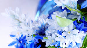 flowers coupon pro flowers coupon wallpaper