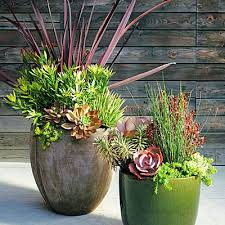 best 25 succulent containers ideas on pinterest succulents in