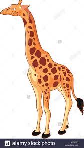 giraffe cartoon stock photos u0026 giraffe cartoon stock images alamy