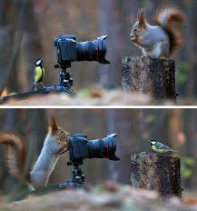 some russian photographer captures the cutest squirrel photo
