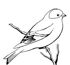 bird coloring pages falcon coloringstar