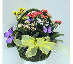 florist naples fl s day flowers delivery naples fl driftwood garden center