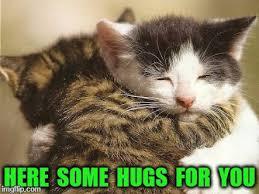 Cat Hug Meme - hug cats latest memes imgflip