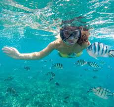 Louisiana Snorkeling images Cabo pulmo marine preserve explore the lush coral reefs jpg