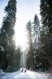28 best lake tahoe images on lake tahoe northern