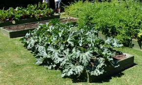 small space vegetable gardening ideas birds and blooms