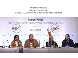 global alliance against redd an indigenous environmental network