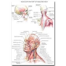 Human Anatomy And Body Systems Online Get Cheap Human Anatomy Body Aliexpress Com Alibaba Group