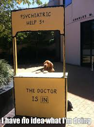 Dog Doctor Meme - i may have no idea what i m doing but i m am excellent doctor i