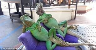 Seeking Episode 1 Lizard Lounging Lizards Get Their Photo Snapped Outside Beverly