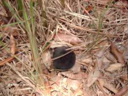 magic mushrooms georgiabeforepeople