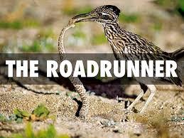 the road runner biomes by z v