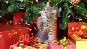 little grey kitten playing with christmas decorations under a
