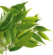 tea tree sheet mask 7th heaven montagne jeunesse