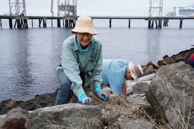 coastal cleanup report from puget sound puget soundkeeper alliance