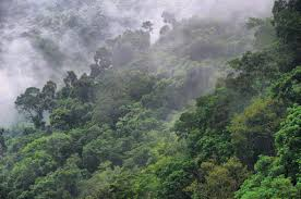 canopy amazon canopy animals amazon rainforest photo photos and wallpapers