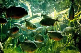 cool freshwater fish pets aquarium images