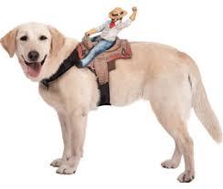 Horse Jockey Halloween Costume Male Dog Costumes Pet Costumes Sizes Dog Costumes