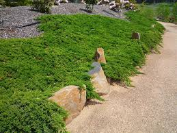 native plants new zealand garden design garden design with of the best new zealand native