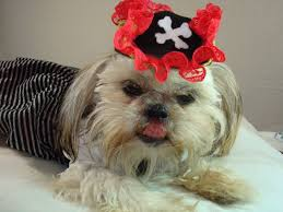 dog clothes for halloween pirate costume idea pt 1 3 15 min diy tricorn pirates hat